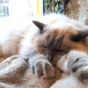 chat du chatlheureux